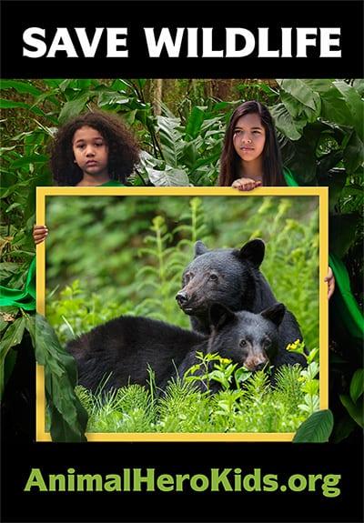 BLACK BEAR MEMORIAL