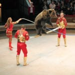 Moscow Circus Brown Bear