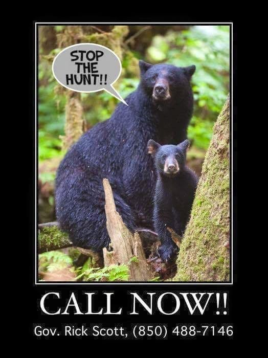 stop the bear killing