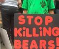 Black bear memorial led by 5 yr old Animal Hero Kid