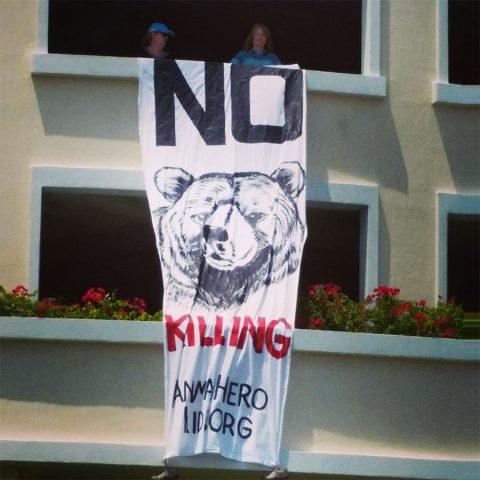 No More Florida dead bear families!!